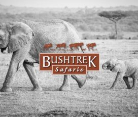 Bushtrek Safaris Ltd